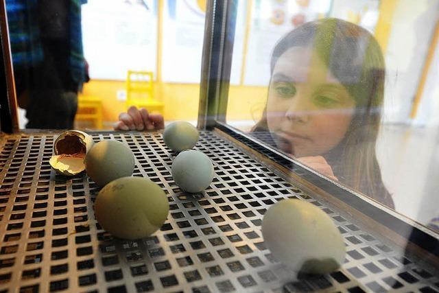 Was schlüpft denn da aus grünen Eiern ?