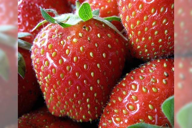Eine Symphonie für die Erdbeere