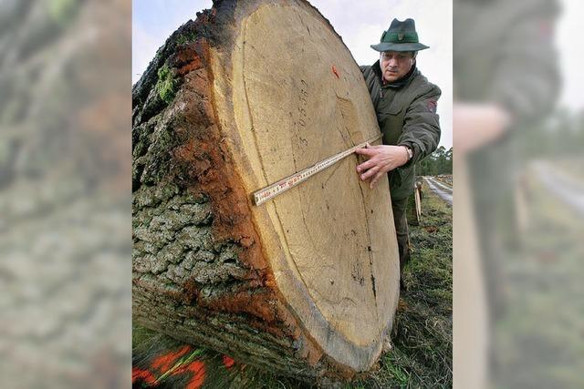 Forst meldet Rekordgewinn