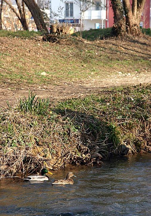 Auf dass die Enten weiter geruhsam ihr...am Reichenbach soll verhindert werden.    Foto: Silvia Faller