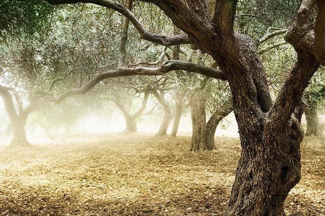 Spanisches Dorf will Cannabis-Plantage anlegen