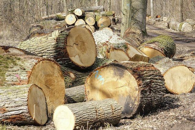 Holzeinschlag im Unterwald