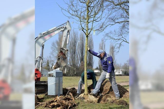 Mehr Information über Baumschutz