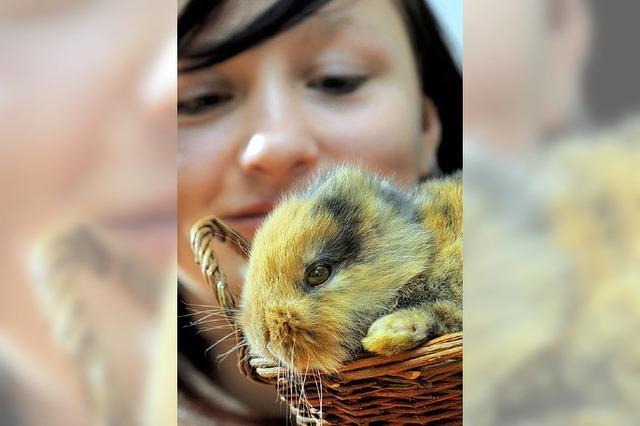 AUCH DAS NOCH: Zoo-Star stirbt bei Dreharbeiten