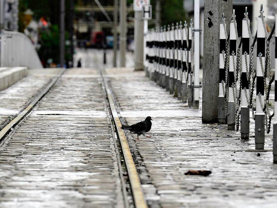 Viel Platz für Tauben: Am Donnerstag bleibt der Verkehr auf den Tramlinien aus.  | Foto: Ingo Schneider