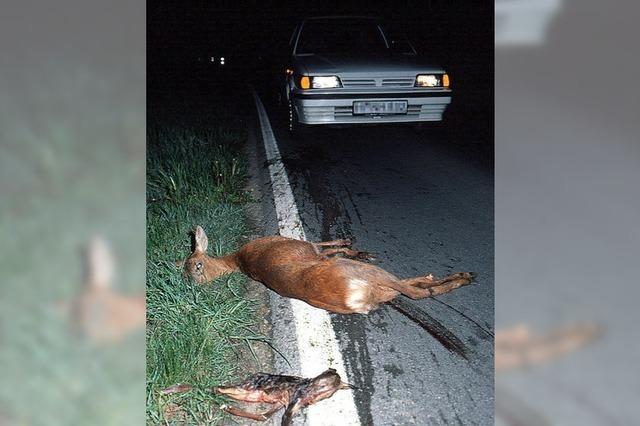 """""""Achtung Wildwechsel"""": Die Kollisionsgefahr mit Wildtieren steigt mit der Zeitumstellung"""