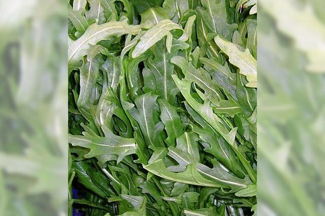 Die Rauke gibt dem Salat die Würze
