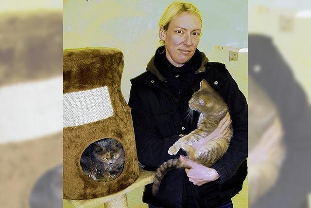 Ein ganzes Katzenleben im Tierheim