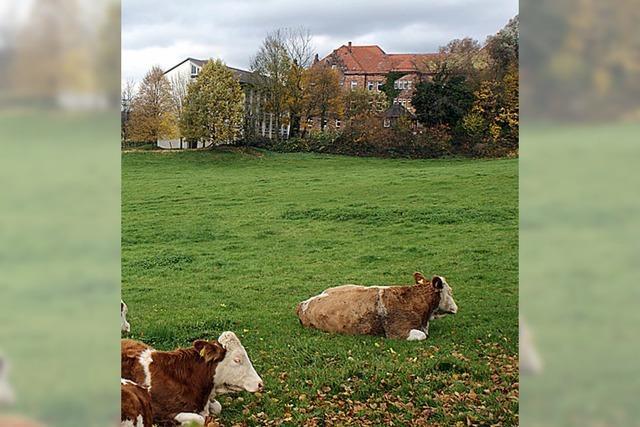 Ökologischer Landbau bietet Chancen