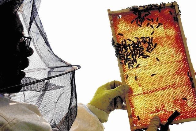 Immer mehr Bienen werden importiert - die Folgen sind nicht abzusehen