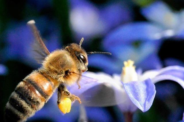 Den Imkern sterben im Winter die Bienen weg