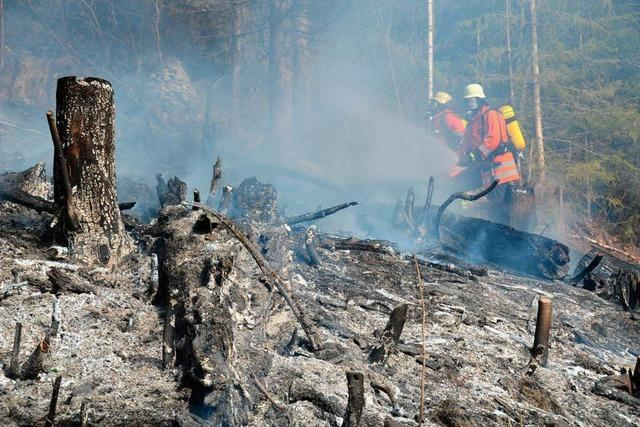 Waldbrand am Stadtrand durch Zigarettenkippe verursacht?