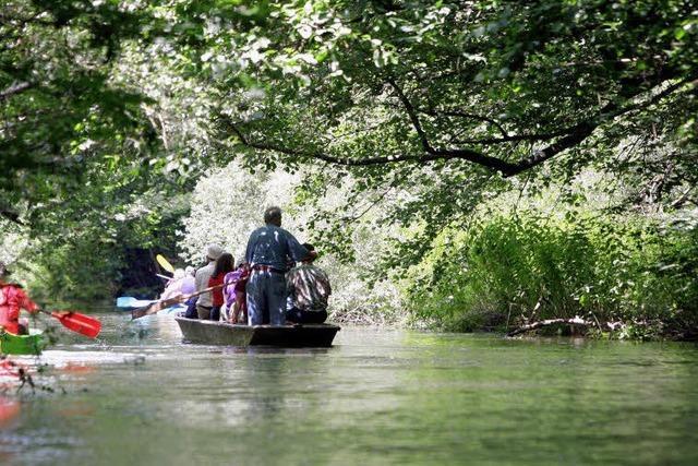 Naturschutzgebiet Taubergießen: Auf den Spuren der Dachse