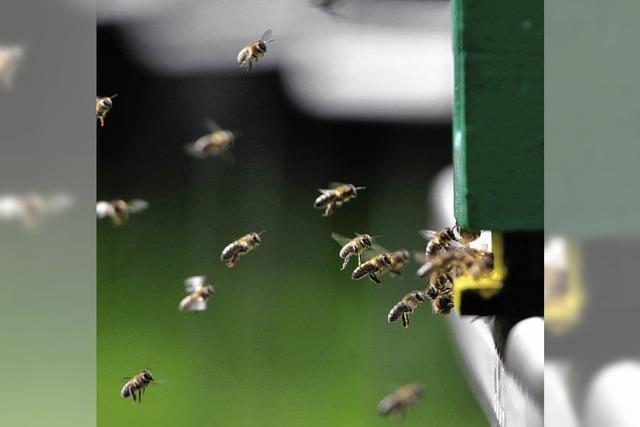Viele Bienenvölker ausgelöscht