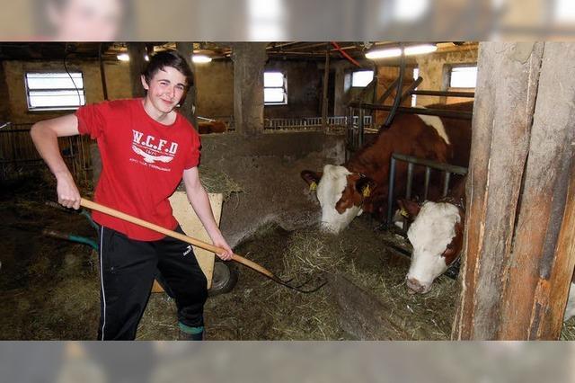 Am liebsten hilft Tobias beim Füttern der Milchkühe