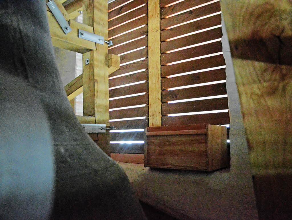 turmfalken vertreiben tauben aus kirchturm l rrach badische zeitung. Black Bedroom Furniture Sets. Home Design Ideas