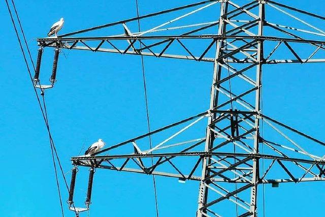 Wieder sorgt ein Storch für Stromausfall in Emmendingen