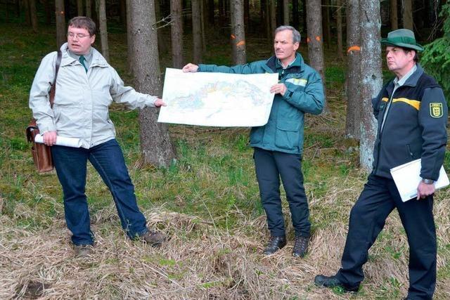 Ziel: Naturnaher Wirtschaftswald