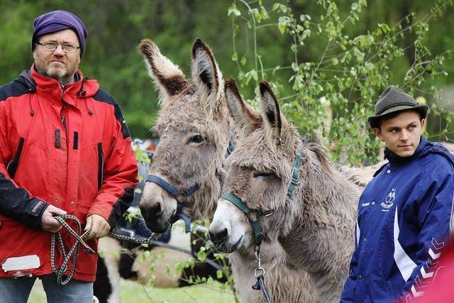 Pferde trotzen Dauerregen