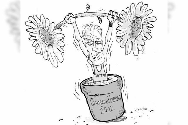 Sportliche Chrysanthema 2012