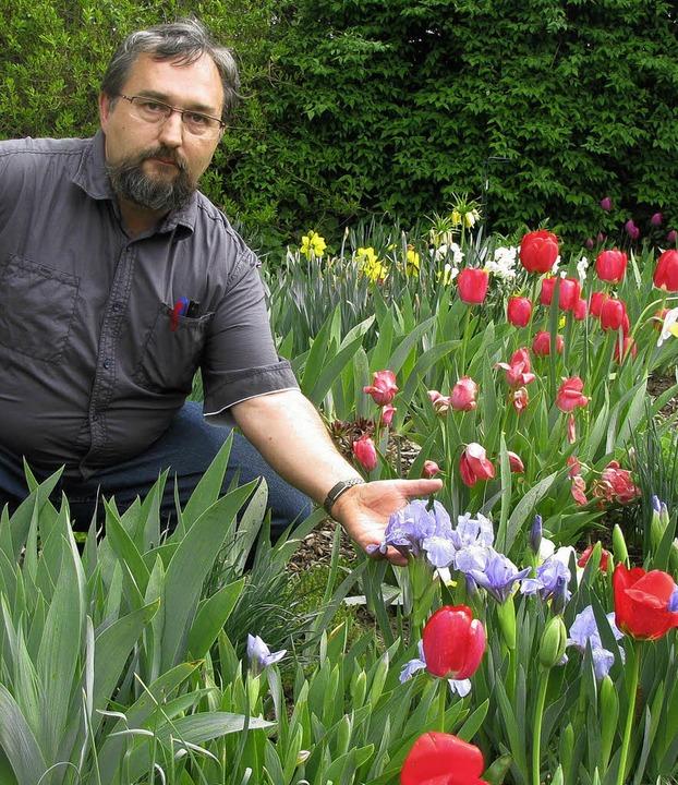 Noch überwiegen die Tulpen, aber Fritz...öffnet er seinen Garten für Besucher.   | Foto: Michael Gottstein