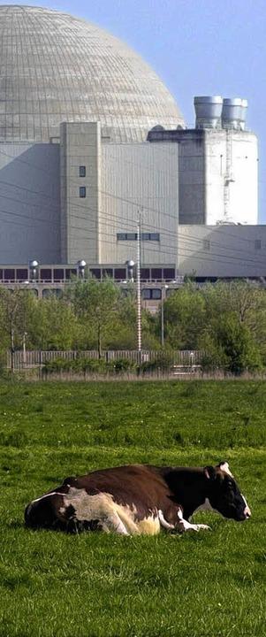 Ein Kuh vor dem Kernkraftwerk  Brokdorf  | Foto: dapd