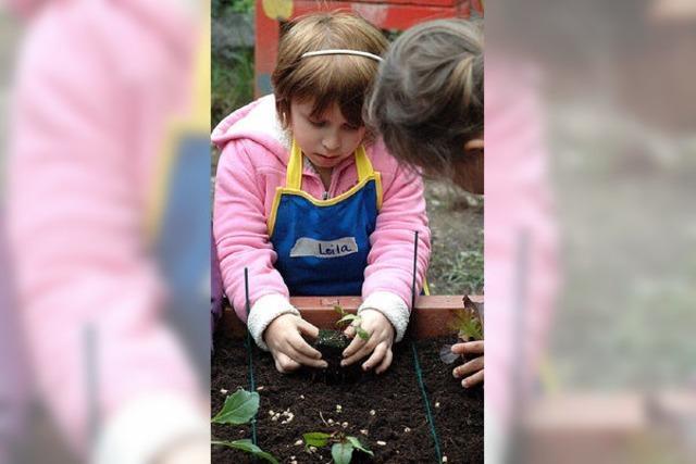 Kinder pflanzen Salat