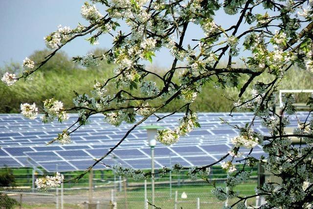 Solarpark feiert Frühlingsfest