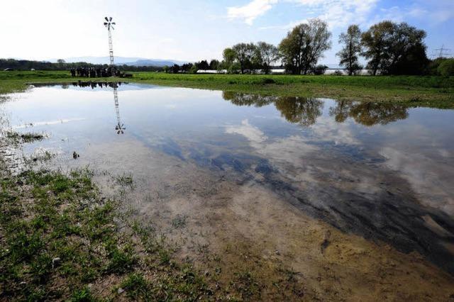 Wasser für Störche: Bei Opfingen gibt es einen Storchenteich
