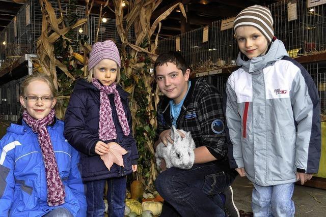 Preiswürdige Kaninchen aus allerlei Rassen