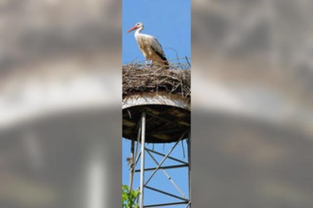 Neuer Vogellehrweg am Canal de Huningue