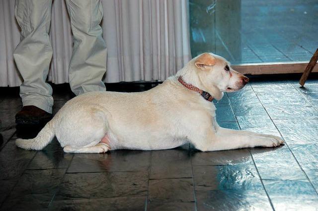 Slum-Dog auf der Stühlinger Bühne