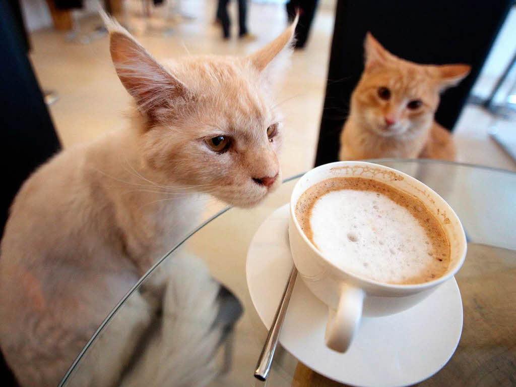 Cat Cafe Deutschland