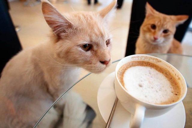 Katzen-Café in Wien: Schmusen beim Heißgetränk