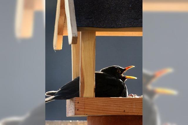 Alle Vögel sind schon da – und werden nun gezählt
