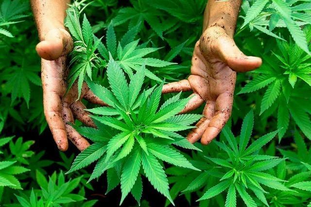Grüne: Mehr Kranke sollen Cannabis bekommen
