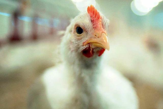 Tierärzte müssen Antibiotika-Vergabe dokumentieren