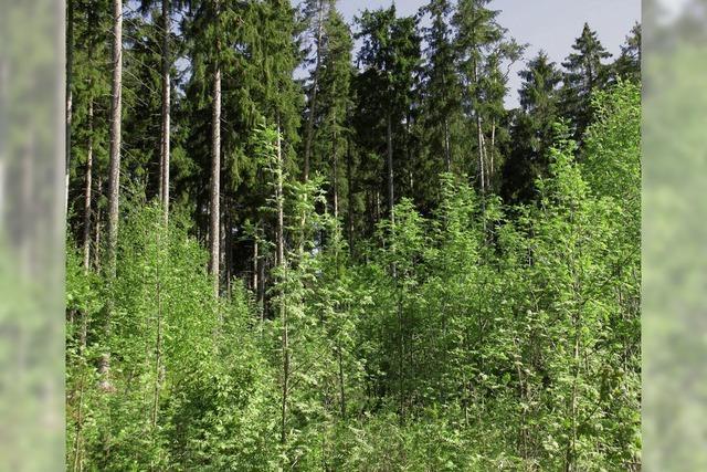 Weiter in Richtung Bergmischwald