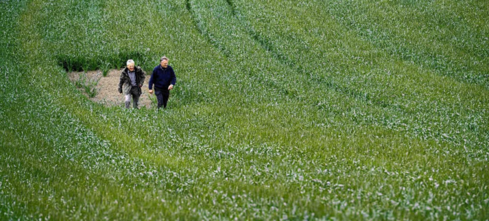Landwirt Günter Linser  und Naturschüt...enner in einem ihrer Lerchenfenster.    | Foto: Ingo Schneider