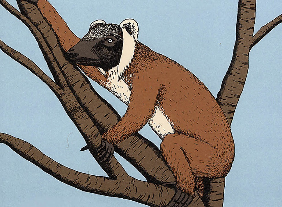 Ein  Tretretretre aus Madagaskar   | Foto: Verlag