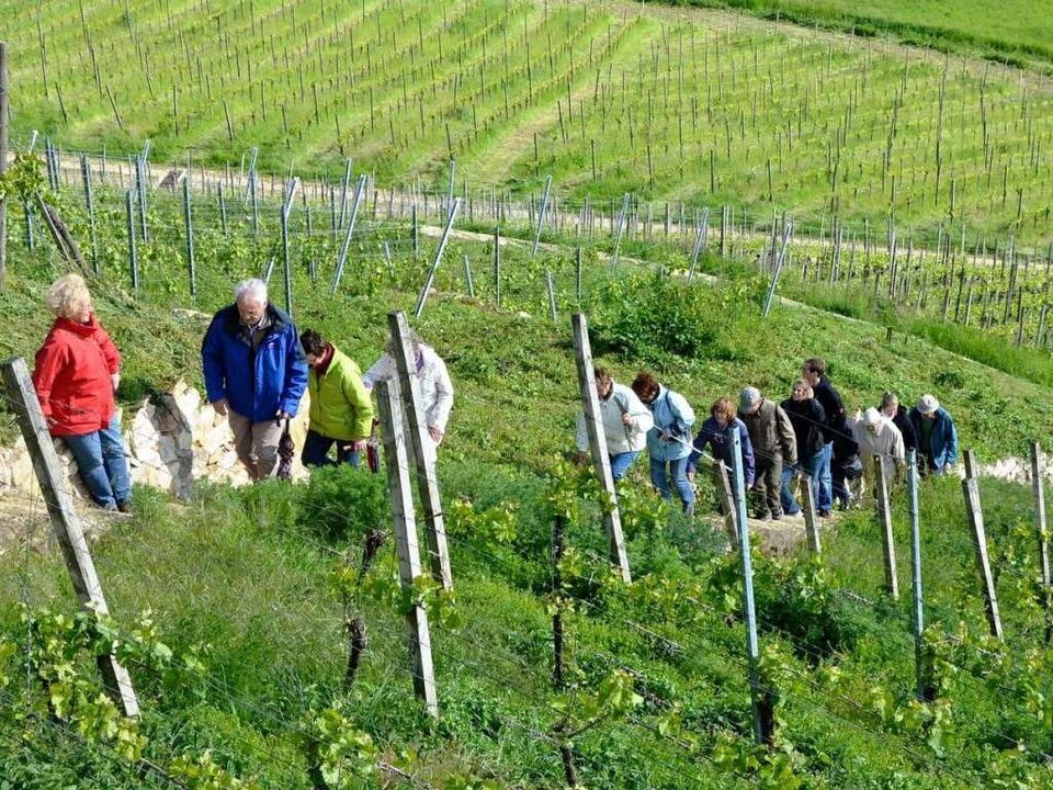 Wanderung auf dem Castellberg    Foto: bz