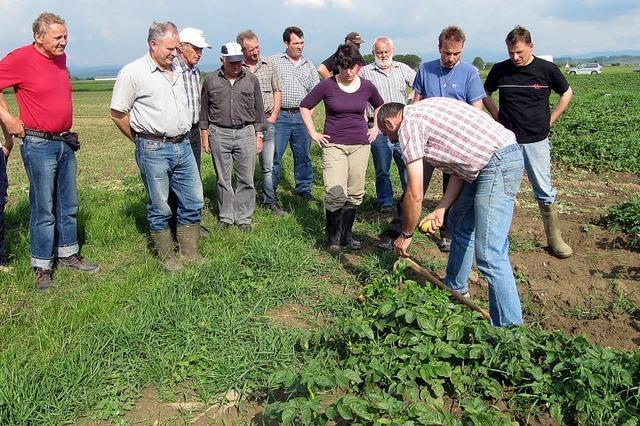 Landwirte hoffen auf tolle Knollen