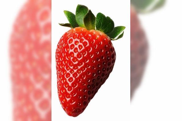 Vom Feld zum Kunden – täglich ändert sich der Erdbeerpreis