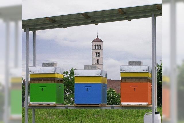 Schon bald gibt es Honig von Hüninger Bienen