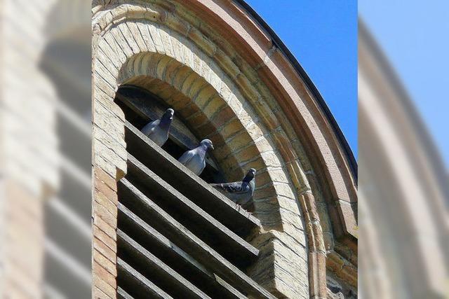 Ungebetene Gäste im Kirchturm