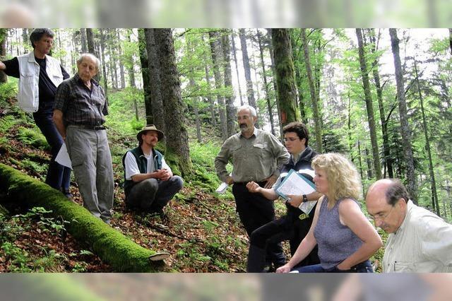 Gute Noten für den Wald