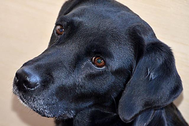 GANZ NEBENBEI: Auf den Hund gekommen