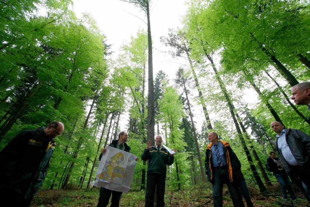 Der Wald wächst – nicht aber der Personalbestand der Forstverwaltung.   | Foto: Bastian Henning