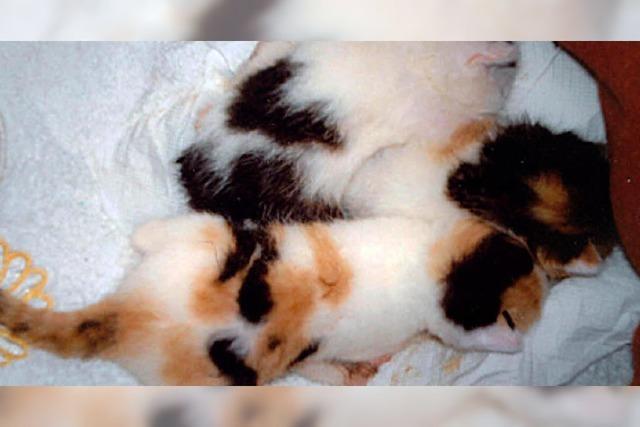 TIERISCH: Kleine Kätzchen ausgesetzt