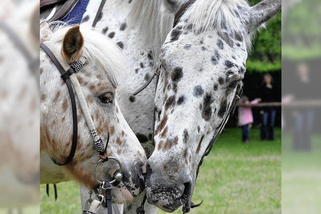 Volksfest für Pferdefreunde